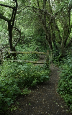Path to where