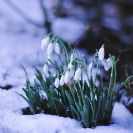 snow092 copxy