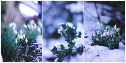 snow096 copyx