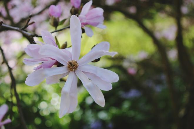 spring_0015 copy