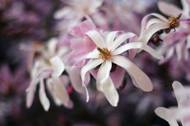 spring_0028 copy
