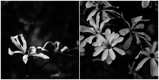 spring_0043 copxy