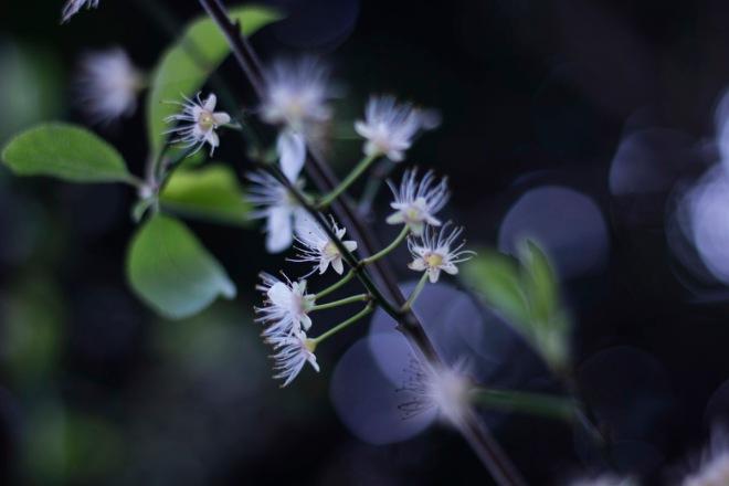 240314_flowers_0013