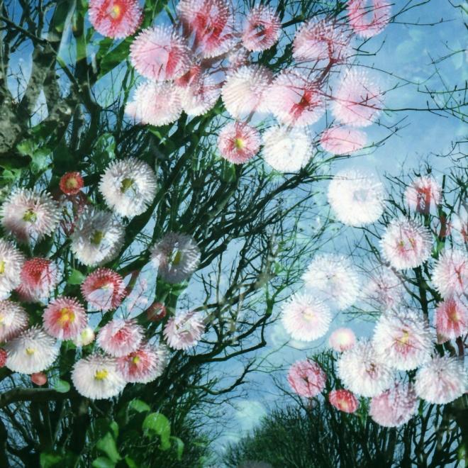 spring-kodak-colorplus200_0026